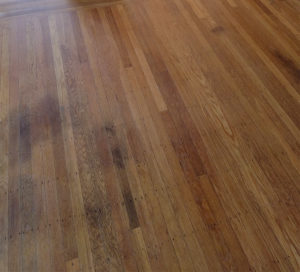The Best Wood Floors For Dog And Cat Owners Part 1 Avi